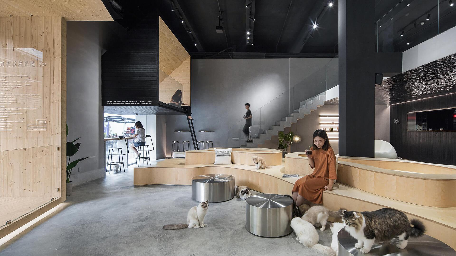 Làm sao để có thiết kế quán cafe pet thu hút